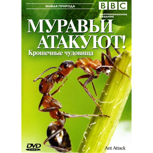 смотреть фильм онлайн про муравьёв убийц