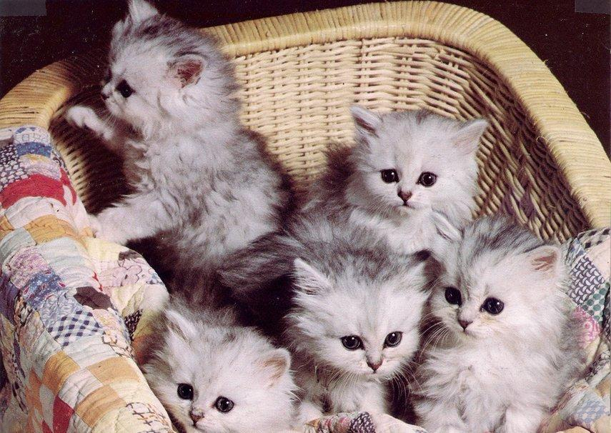 http://images.forwallpaper.com/files/thumbs/preview/27/275485__five-kittens_p.jpg