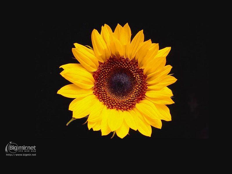 http://i.bigmir.net/papers/3/0/flowers-5-800.jpg